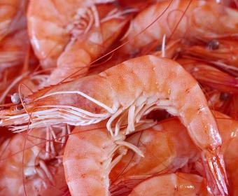 thumb categoría pescado y mariscos